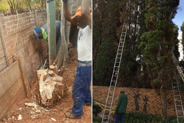 911 Tree Felling in Pretoria